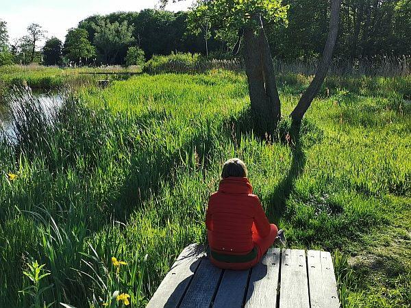 Bosbaden Amsterdamse Bos - Forest Bathing Nederland