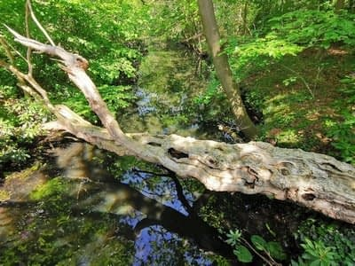 Bosbaden / Shinrin Yoku Breda - Forest Bathing Nederland