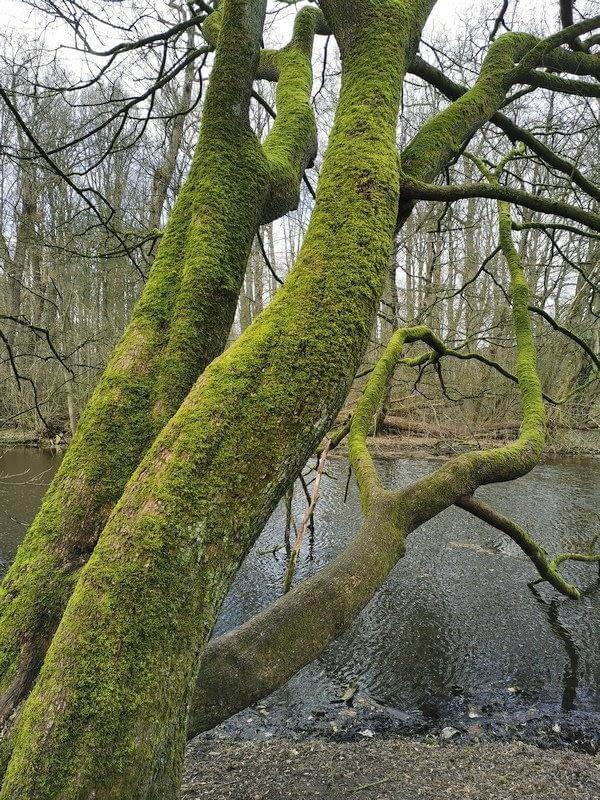 Bosbaden / Shinrin Yoku in Nederland - Amsterdamse Bos - Forest Bathing Nederland